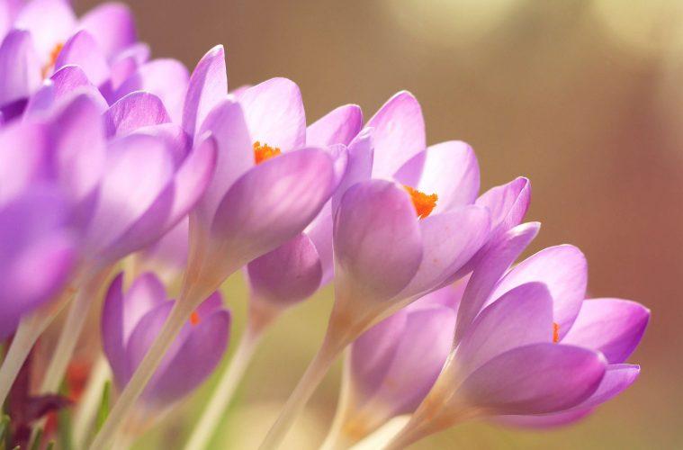 pink-flowers-garden-bloemen-planten
